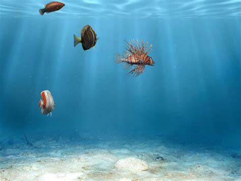 fond d 233 cran poissons gratuit fonds 233 cran aquarium poissons