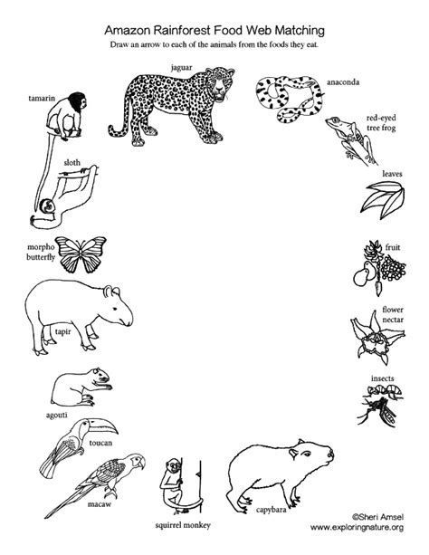 food chain rainforest worksheet xrp coin full form