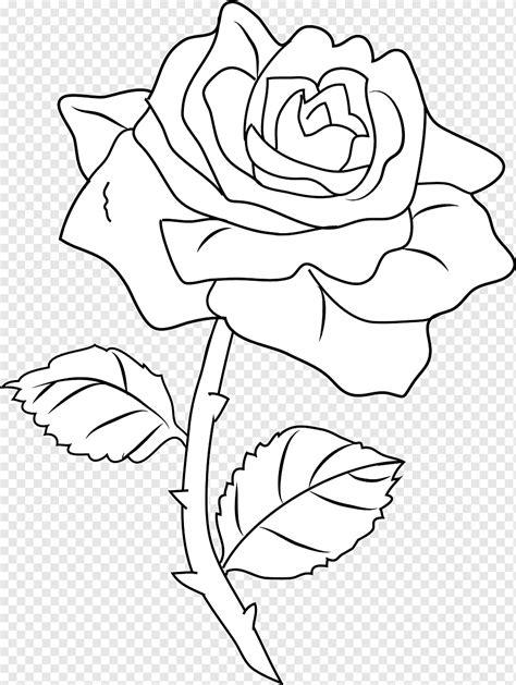 Linha arte desenho livro para colorir rosa rosas preto e