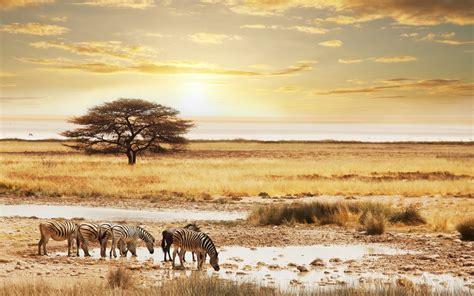 Self-drive Safari through wonderful Namibia ...