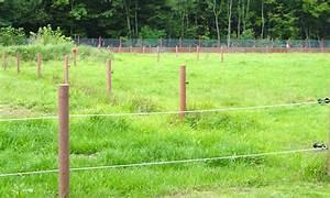 Piquet En Bois Pour Cloture : isolateur cloture ~ Farleysfitness.com Idées de Décoration