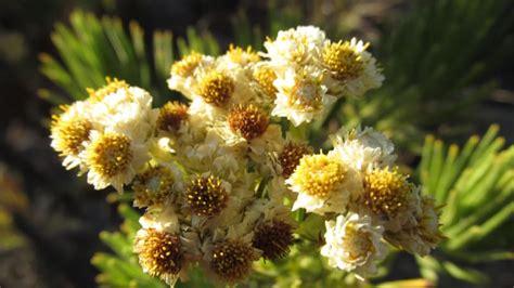 bunga pengertian perbedaan ciri ciri repoduksi
