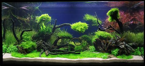 Planted Aquarium Aquascaping by Adrie Baumann And Aquascaping Aqua Rebell