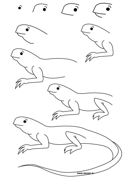 Best Lizard Drawing Ideas And Images On Bing Find What You Ll Love