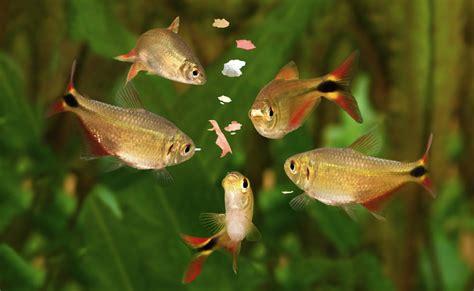 les besoins alimentaires des poissons daquarium aquablog