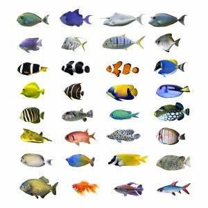 Aquarium Fische Süßwasser Liste : fischarten tierklinikennet ~ Watch28wear.com Haus und Dekorationen