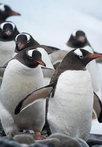 15 Interesting Facts About Antarctica