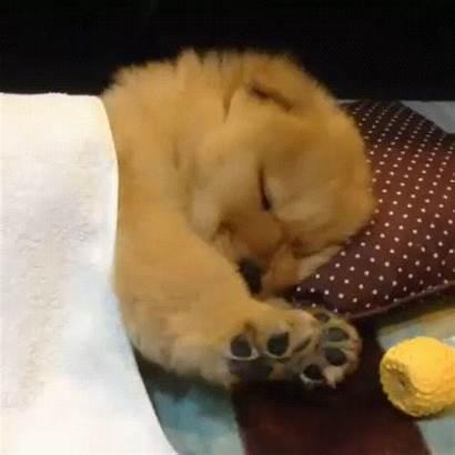 Sleepy Puppy Gifs Giphy Justviral Bonjour 9gag
