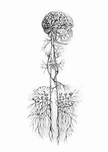 Botanical Nerves By Lilly Perrot  Illustration  Drawing