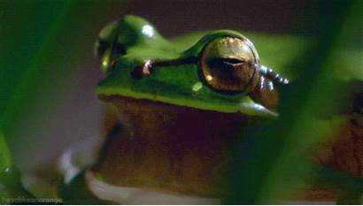 Frog Tree Giphy Bask Gifs European Orange