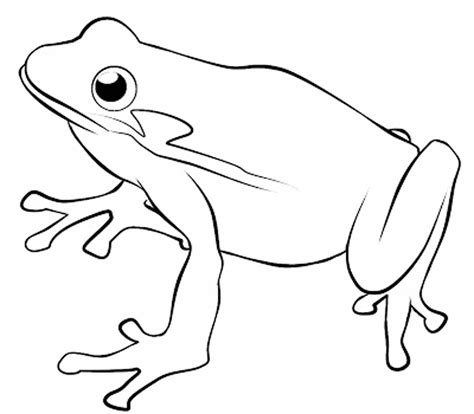 Line Drawing Of Frogs At Getdrawingscom Free For
