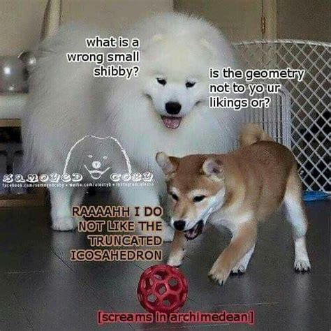 Bork Memes - 226 best bork memes images on pinterest