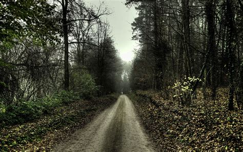 nature HDR Trees Forest Path Dirt Road Wallpapers HD