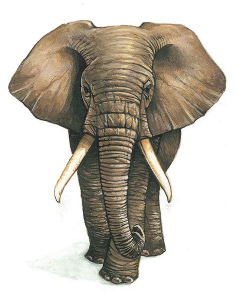 dictionnaire de cuisine larousse encyclopédie larousse en ligne éléphant