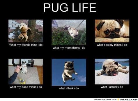 Pug Memes - 55 best pug memes