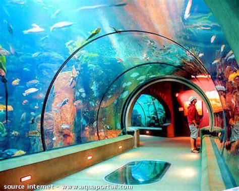 aquarium dans le nord acclimatation d une an 233 de mer en aquarium
