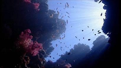 Coral Fish Sunlight Paradise Heaven Dreams Want