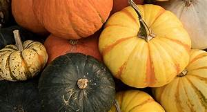 Pumpkin Growing Guide
