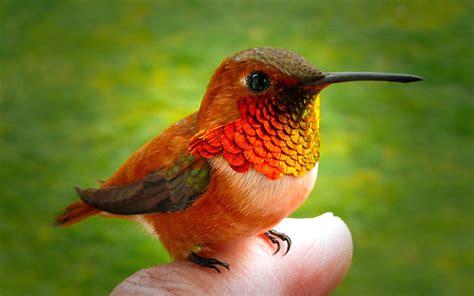 kingdom of birds hummingbird article glbrain com