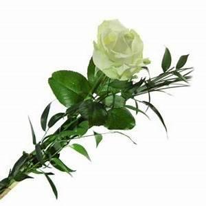 Einzelne Blume Vase : blumenstrau einzelne rose wei von florito flowerpost auf ~ Indierocktalk.com Haus und Dekorationen