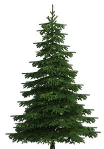 Christmas Tree Name Tags by Realistic Pine Tree Png Clip Art Best Web Clipart