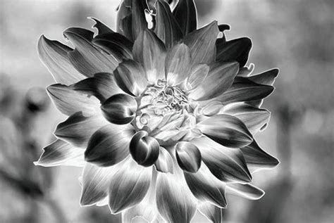 How Is Solarization Used In Photography Quora