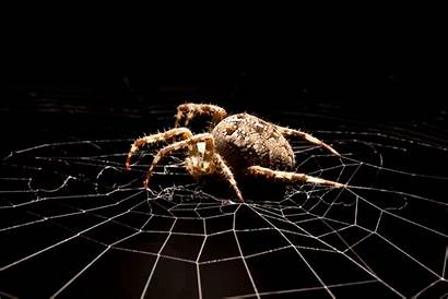 Scary Things Spider Human Being