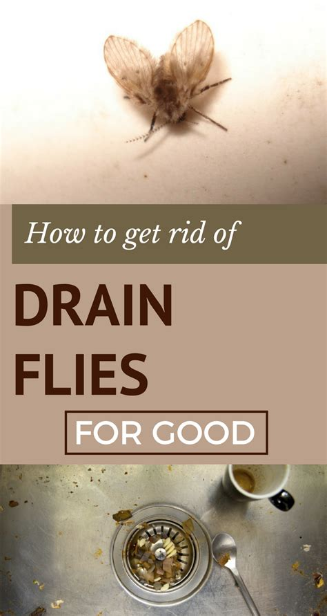 how to get rid of drain flies for ncleaningtips
