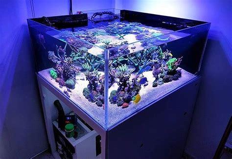 model aquarium ikan hias minimalis terbaru  dekor