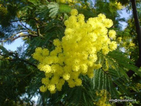 fiori 8 marzo fiori per la festa della donna 8 marzo fiorista