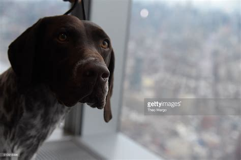 German Shorthaired Pointer Shed by German Shorthaired Pointer Sidney Center New York