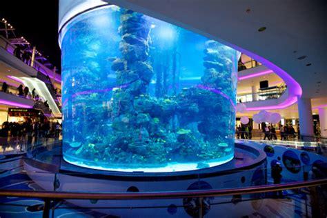 ruim 2000 vissen aquarium morocco mall dood door zuurstofgebrek