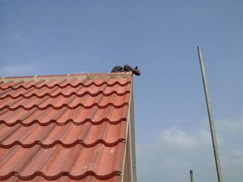 half ridge cat finial on the roof