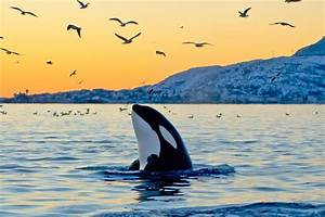 6 Ways You Can Help Save Captive Killer Whales Right Now