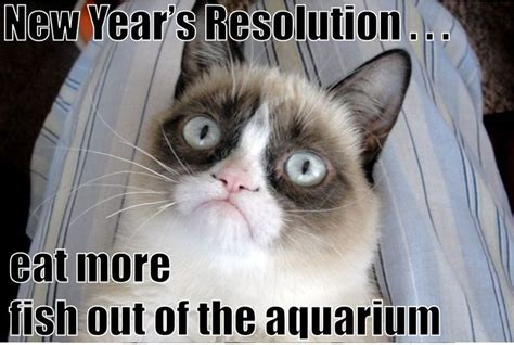 Grumpy Cat New Years Meme - 701 best life is good not tard the grumpy cat images on pinterest