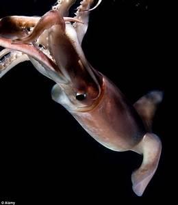 Florida eyeball: Washed up eye belonged to a swordfish or ...