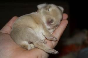 Baby Bunnies - My Happy Place