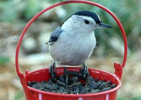 attracting birds feeding birds best birdseed