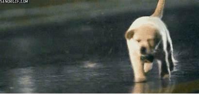 Rain Dog Running Puppy Run Monday Funny