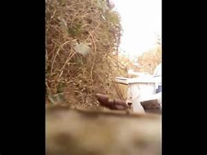 Crottes De Souris : crotte de souris youtube ~ Melissatoandfro.com Idées de Décoration