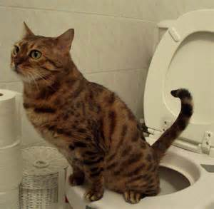 cat toilet cats that in the house why do they do it and how can