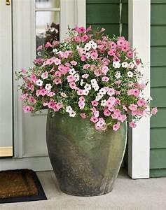 Front, Porch, Flower, Pot, Arrangements