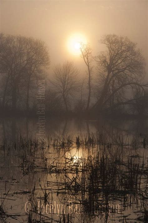eerie foggy morning marsh land  diffused sunlight fine