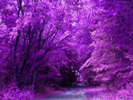 purple nature photography xcitefunnet