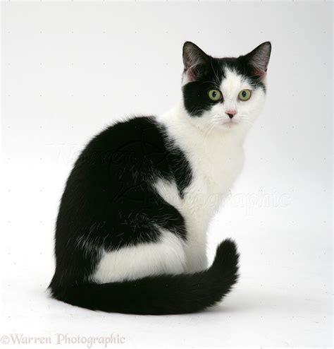 Black And White Cat Photo Wp26260