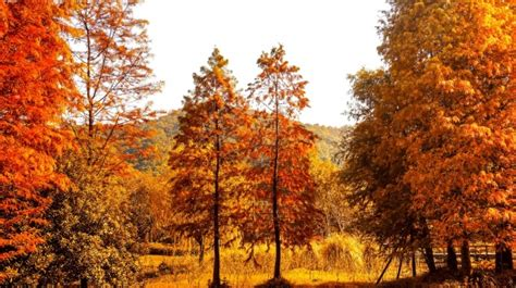 paisaje natural en colores calidos descargar fotos gratis