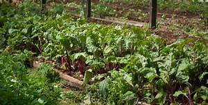 Siete consejos para construir un huerto ecologico en casa for 5 cultivos faciles para empezar un huerto en casa