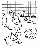 Rabbit Pages Coloring Printable sketch template