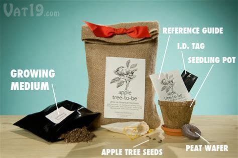 grow your own tree kit the apple tree to be kit comes with everything you need to grow your own apple tree including