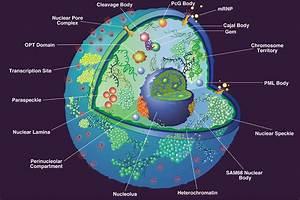 Nucleus  Causes  Symptoms  Treatment Nucleus